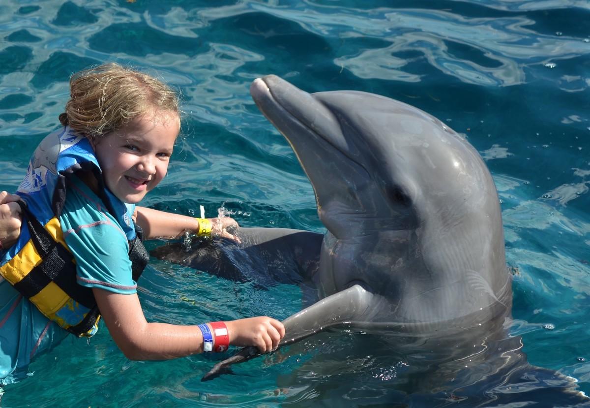 dansa med delfiner