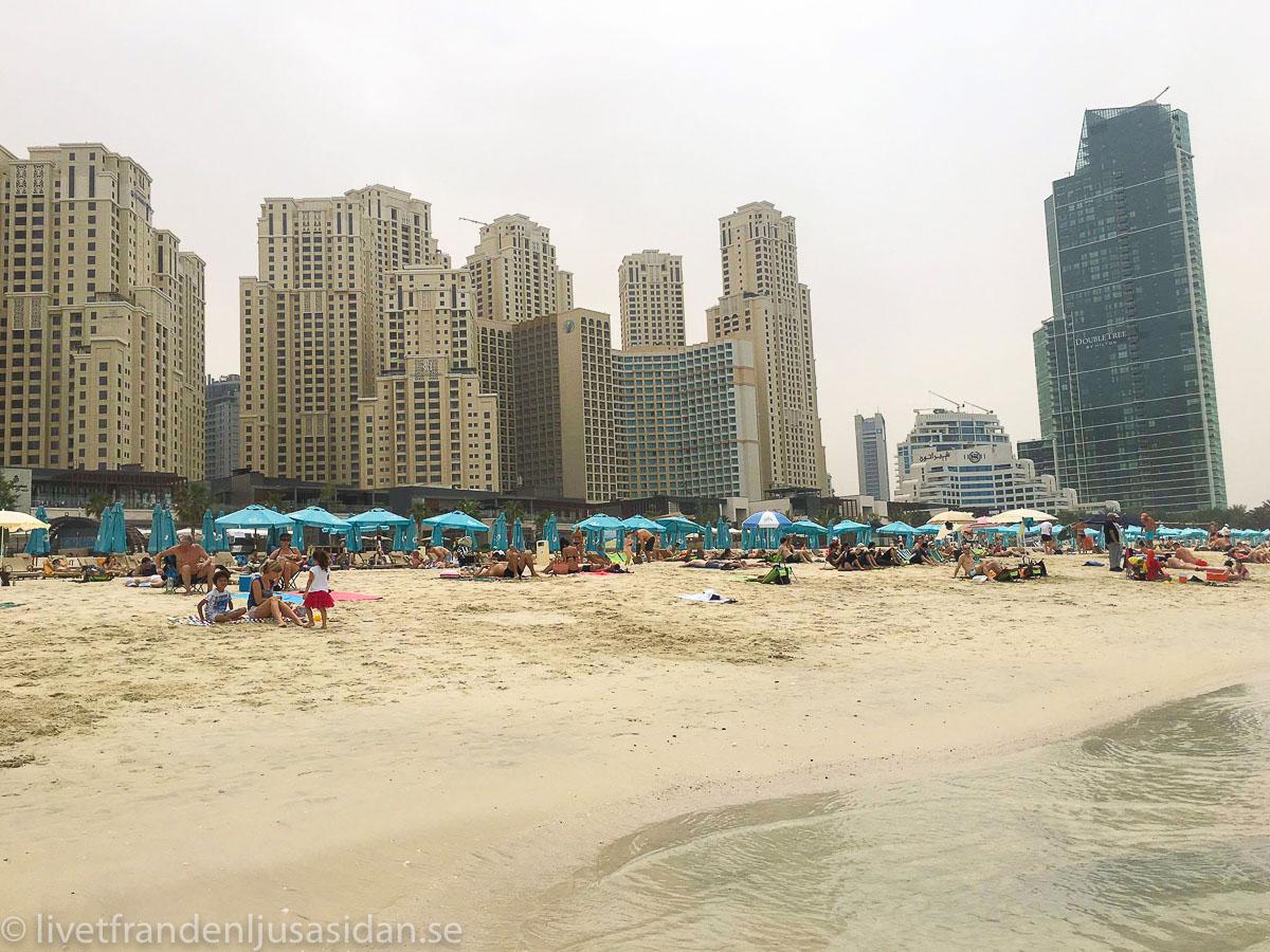 Dubai marina (1 av 1)-6