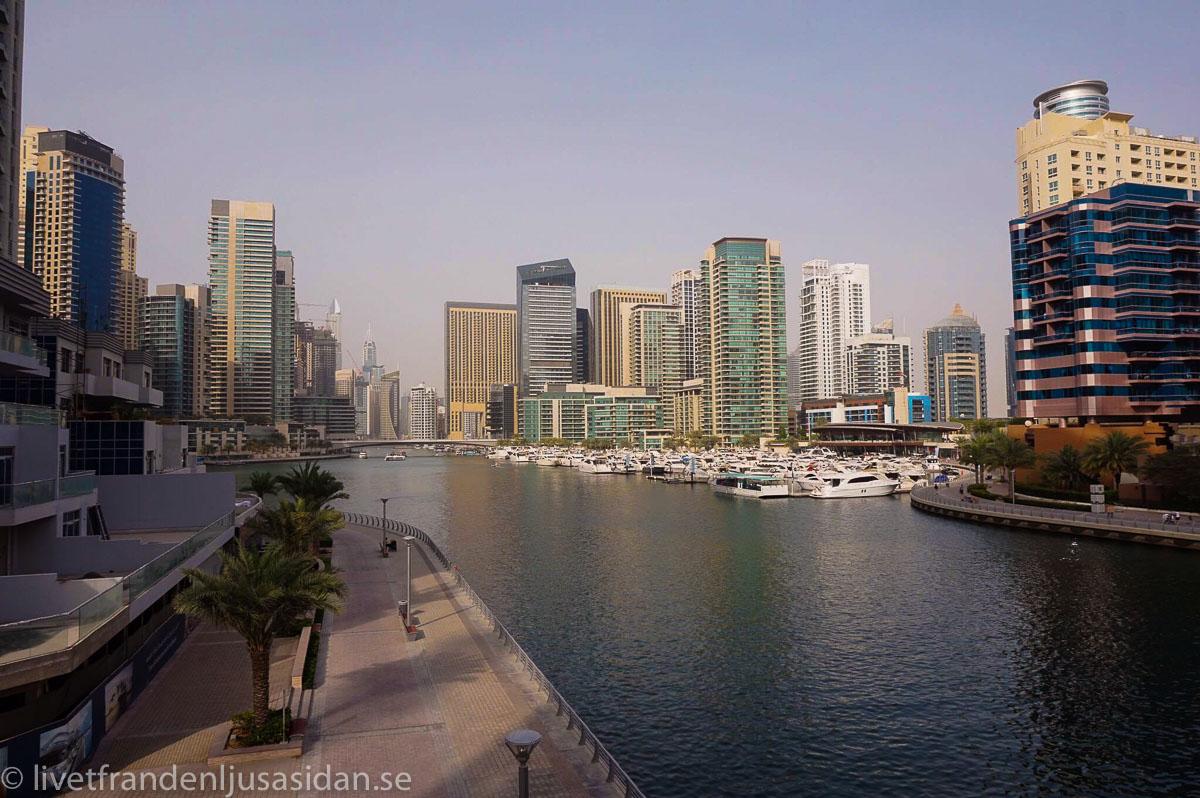 bo i Dubai marina (1 av 1)-4