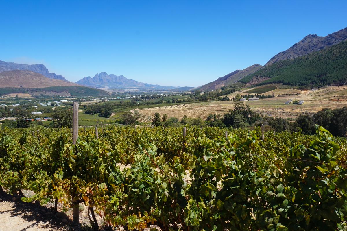 vingårdar Sydafrika