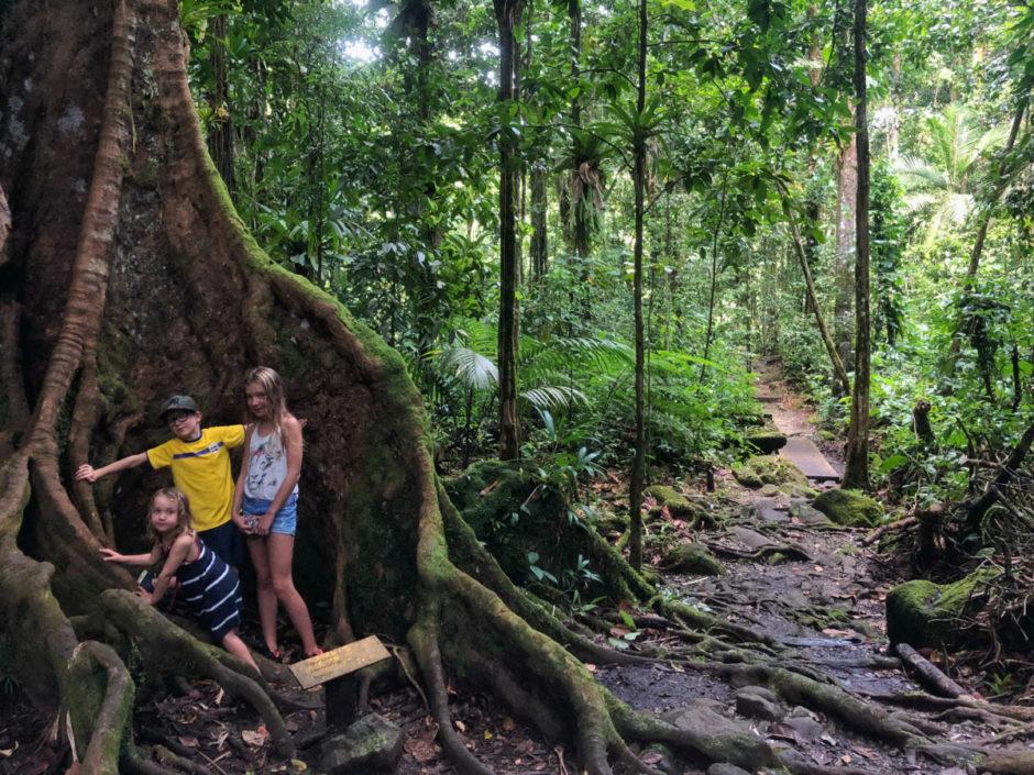 basse-terre-regnskog-guadeloupe