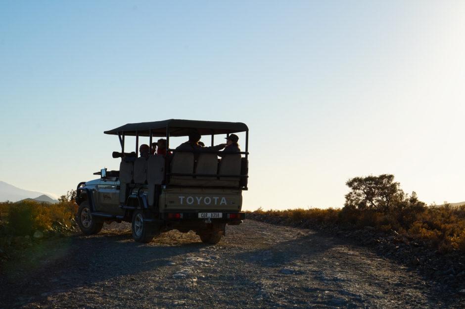 bra-safari-nära-kapstaden-sanbona-wildlife-reserve-22