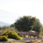 bra-safari-nära-kapstaden-sanbona-wildlife-reserve-26