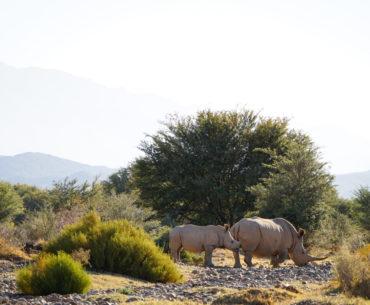 Bra safari nära Kapstaden – Sanbona Wildlife Reserve