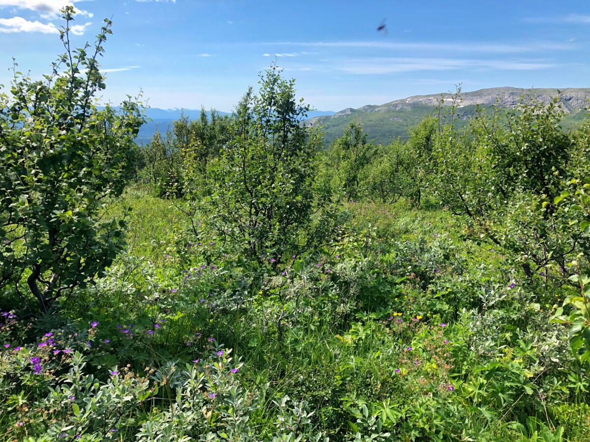 Åre sommar Ullådalen