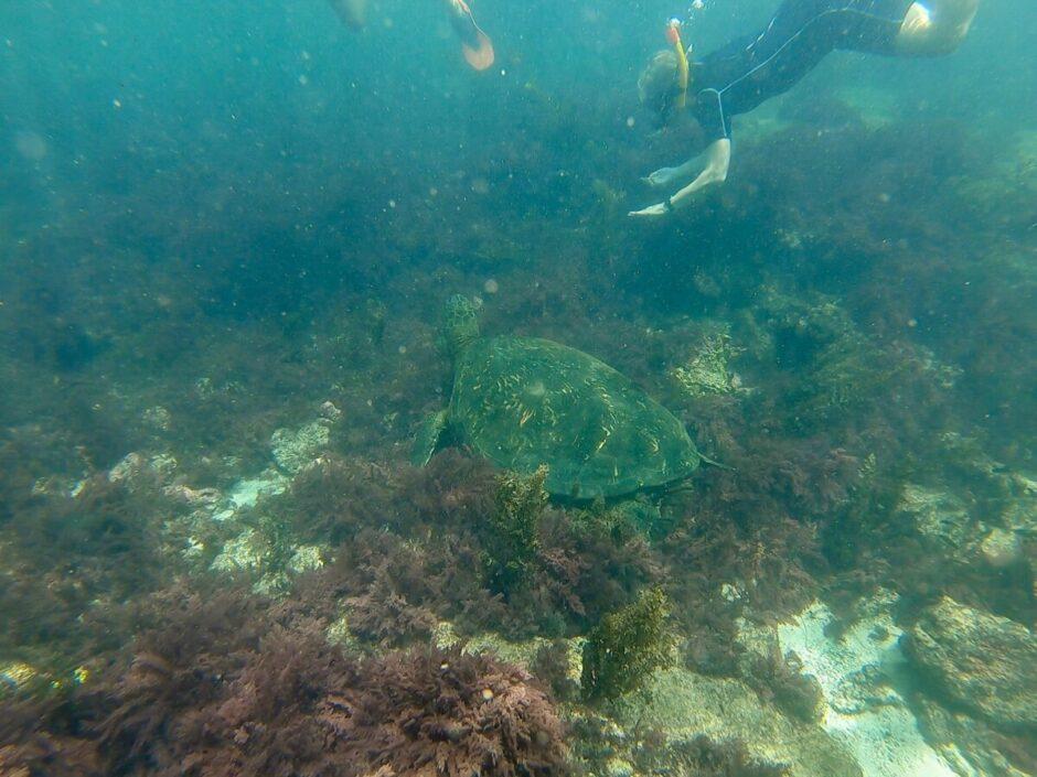 galapagosöarna santa cruz isabela-49