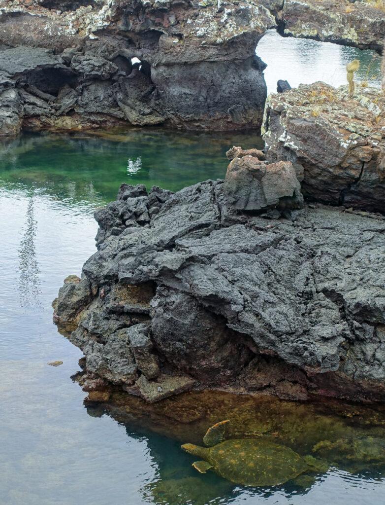 galapagosöarna santa cruz isabela-34