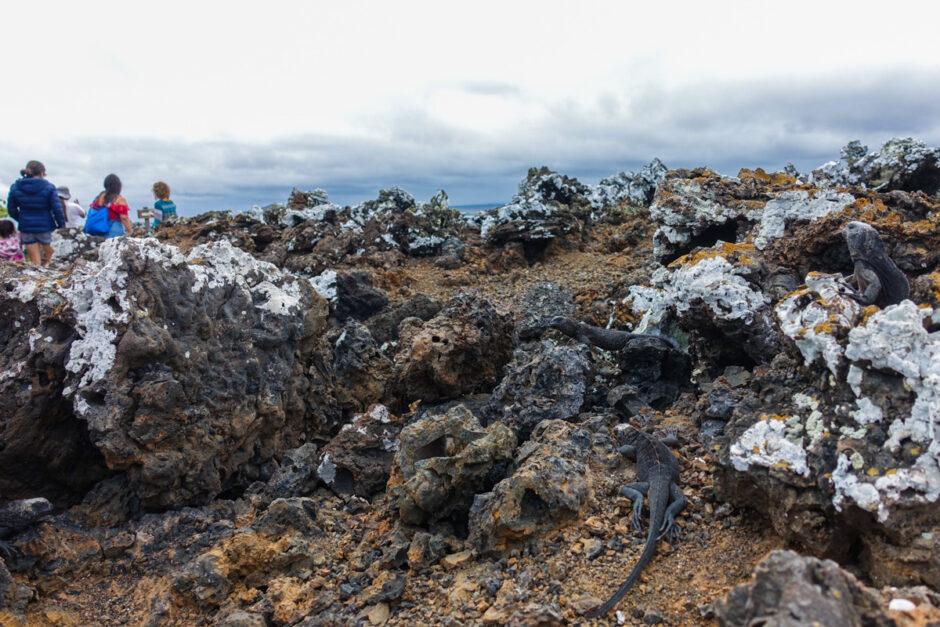 guide till galapagos reseguide galapagosöarna los tuneles