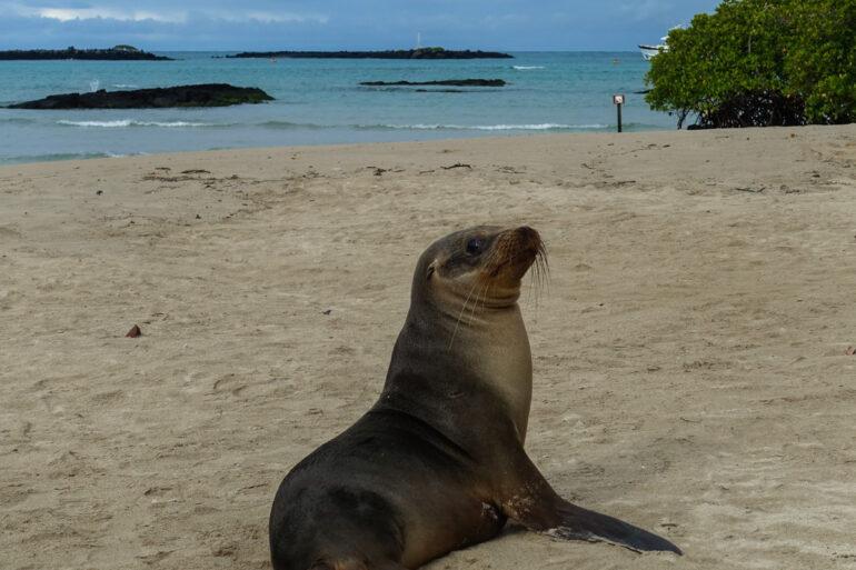 guide till galapagos reseguide galapagosöarna-27