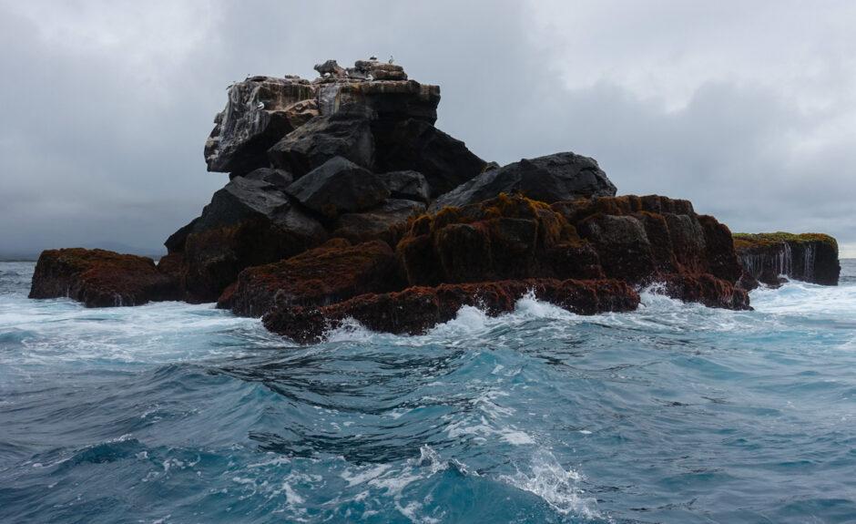guide till galapagos reseguide galapagosöarna-13