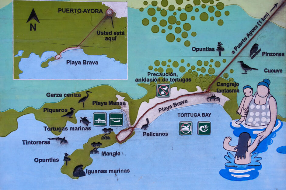 Galapagosöarna Tortuga Bay santa cruz
