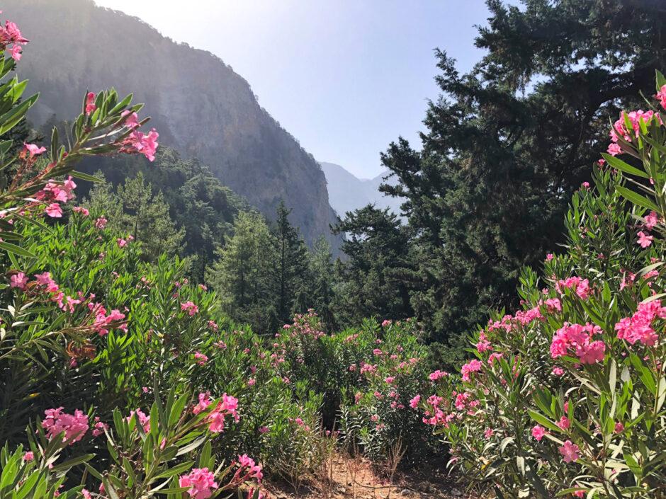 Samariaravinen - en mäktig vandring på Kreta-31