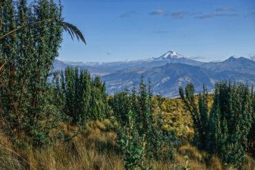 Klimatkompensation för en resa ToR Quito med mellanlandning kostar ungefär 1000 SEK (för mer info kring denna punkt se min klimpatpolicy)