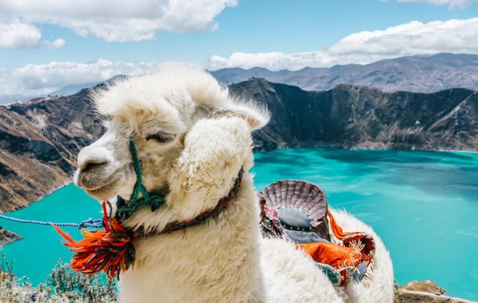 resa till ecuador reseguide