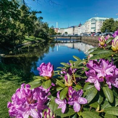 göteborg trädgårdsfabriken blommor försommar